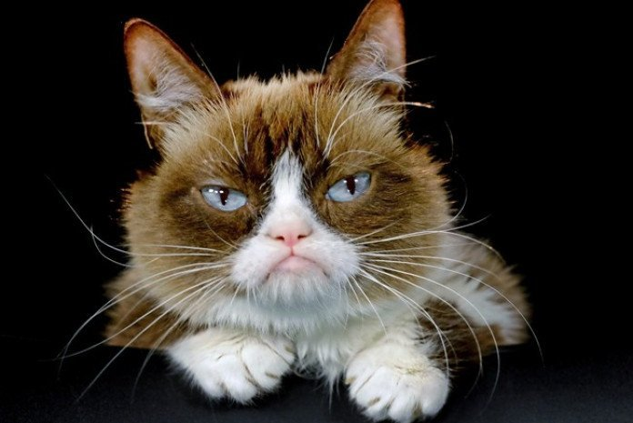 Grumpy Cat's scowl expressions was caused by her feline dwarfism condition and an underbite.